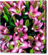 Pink And White Lilies Acrylic Print