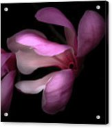 Pink And White Magnolia In Silhouette Acrylic Print