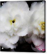 Pink And Yellow On White 3 Acrylic Print