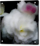 Pink And Yellow On White 5 Acrylic Print