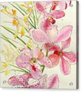 Pink And Yellow Orchids Acrylic Print