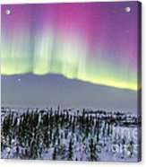 Pink Aurora Over Boreal Forest Acrylic Print