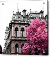 Pink Autumn Acrylic Print