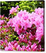Pink Azalea Flowers Landscape 11 Art Prints Canvas Artwork Framed Art Cards Acrylic Print