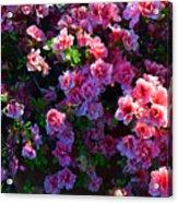 Pink Azaleas Acrylic Print