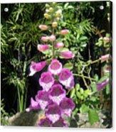 Pink Bell Flowers. Foxglove 03 Acrylic Print