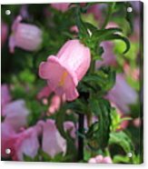 Pink Bell Acrylic Print