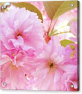Pink Blossoms Art Prints Canvas Spring Tree Blossoms Baslee Troutman Acrylic Print