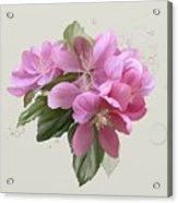 Pink Blossoms Acrylic Print