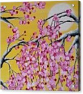 Pink Blossoms / Yellow Skies Acrylic Print