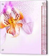 Pink Blotchy Orchid Calendar 2016 Acrylic Print