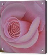 Pink Blush Acrylic Print