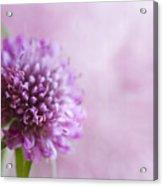 Pink Bokeh Acrylic Print
