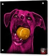 Pink Boxer Mix Dog Art - 8173 - Wb Acrylic Print