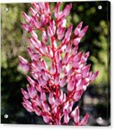 Bromeliads Flowers Acrylic Print