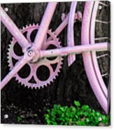 Pink Bycycle Resting On A Tree Acrylic Print