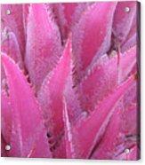 Pink Cactus Acrylic Print