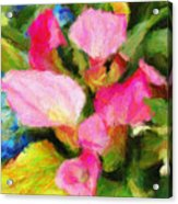 Pink Calla Lilly Acrylic Print