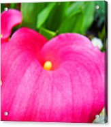 Pink Calla Lily Macro Flower Art Print Lilies Baslee Troutman Acrylic Print