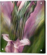 Pink Callas In Calla Vase Acrylic Print