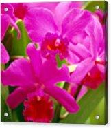 Pink Cattleya Orchids Acrylic Print by Allan Seiden - Printscapes