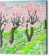 Pink Cherry Garden In Blossom Acrylic Print