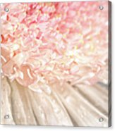 Pink Chrysanthemum With Antique Distress Acrylic Print