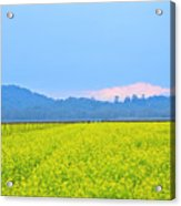 Pink Cloud Over The Mustard Fields Acrylic Print