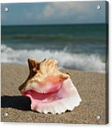 Pink Conch  Acrylic Print
