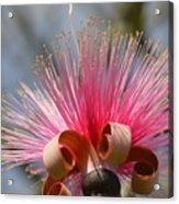 Pink Crown Acrylic Print