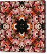 Pink Daisies Kaleidoscope Acrylic Print
