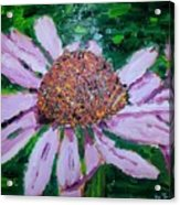 Pink Daisy Acrylic Print
