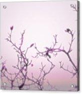 Pink Dawn Acrylic Print by Ann Powell