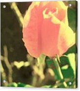 Pink Desolation Acrylic Print