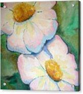 Pink Disc Flowers Acrylic Print