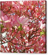 Pink Dogwood Flowering Tree Art Prints Canvas Baslee Troutman Acrylic Print