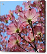 Pink Dogwood Flowers Landscape 11 Blue Sky Botanical Artwork Baslee Troutman Acrylic Print