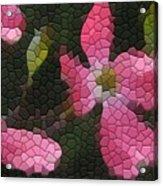 Pink Dogwoods Acrylic Print