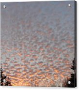 Pink Dotted Sky Acrylic Print