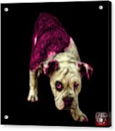 Pink English Bulldog Dog Art - 1368 - Bb Acrylic Print