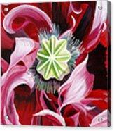 Pink Entanglement Acrylic Print