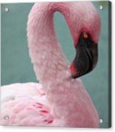 Pink Flamingo Profile 2 Acrylic Print