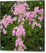 Pink Flower Cross Acrylic Print