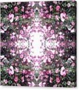 Pink Flower Sky Window Acrylic Print