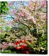 Pink Flowering Dogwood Acrylic Print