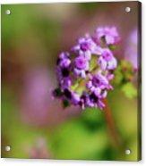Pink Flowers . 40d4800 Acrylic Print