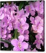 Pink Flowers. 6-22-17 Acrylic Print