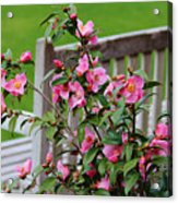 Pink Flowers By The Bench Acrylic Print