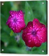 Pink Flowers II Acrylic Print