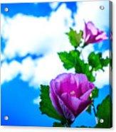 Pink Flowers On A Blue Sky Acrylic Print